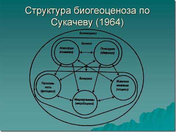 Сукачев_биогеоценоз