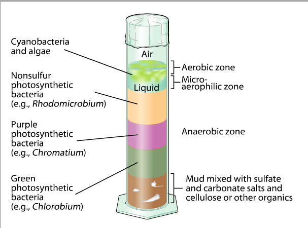 winogradsky column discription A winogradsky column was created by a russian scientist named sergei winogradsky in the late 19 th century the simplified version that you can create with your students in your classroom will provide an environment in which to explore the microbial world.