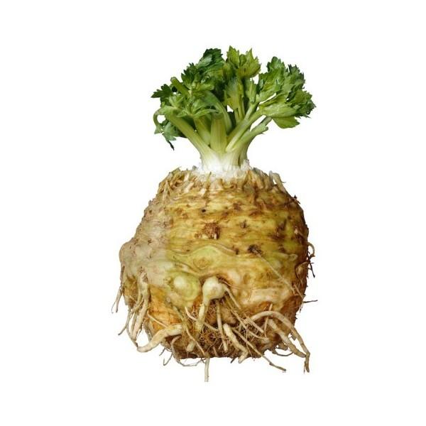 как выглядит корень сельдерея