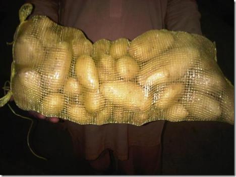 Картофель, Сайдовская Аравия