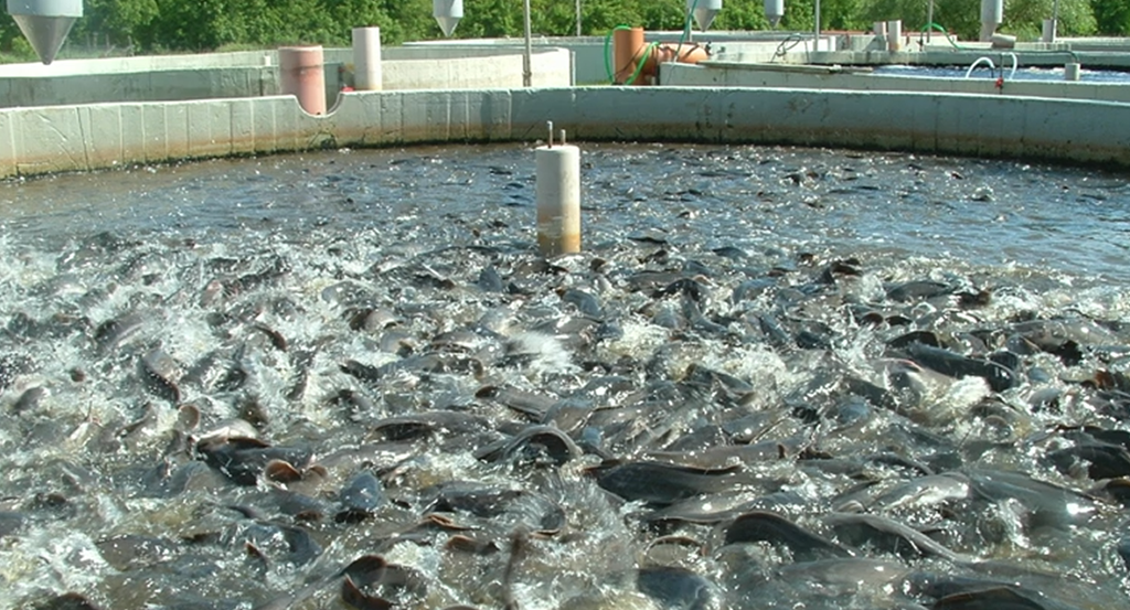 Проблемы аквакультуры России обсудят на конференции в Новгородской области