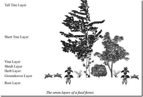 семь слоев леса