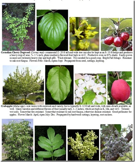 плодовые