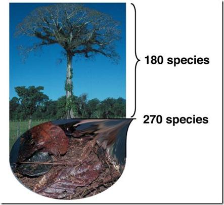 число видов живущих в подстилке